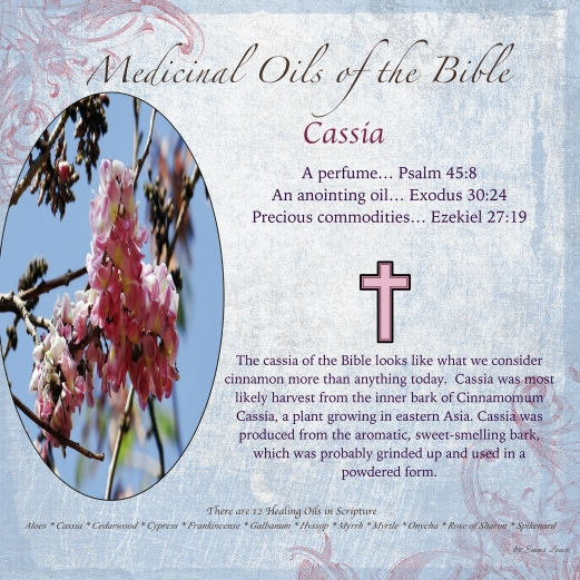 Cassisa_12MOBS copy copy-001