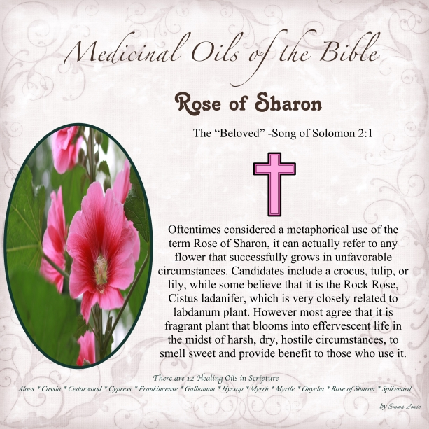 Rose of Sharon-001