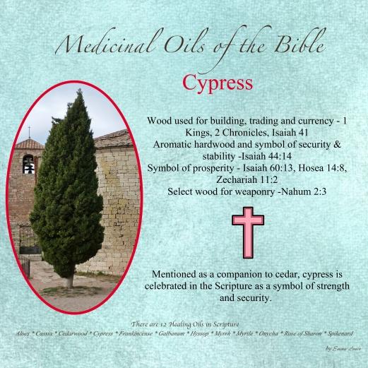 Cypress-001