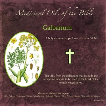 Galbanum-001