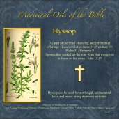 Hyssop-001