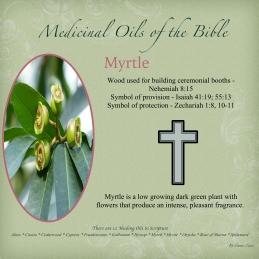 Myrtle-001