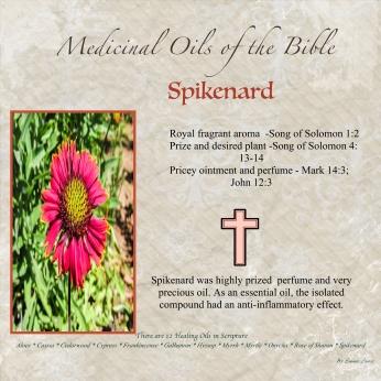 Spikenard-001