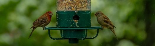 birds-3414240_640